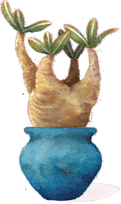 植木鉢イメージ